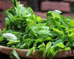 Rau ngót – Cây rau, cây thuốc quý